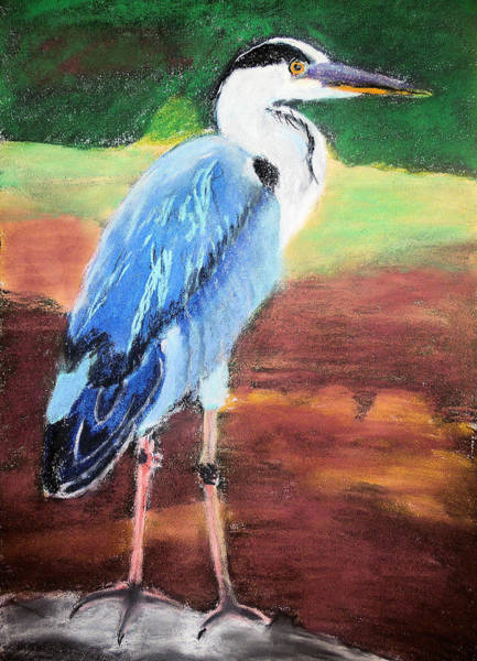 Painting - 08282016 Female Blue Heron by Garland Oldham
