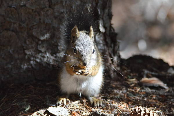 Photograph - Squirrel Echo Lake Trail Mnt Evans Co by Margarethe Binkley