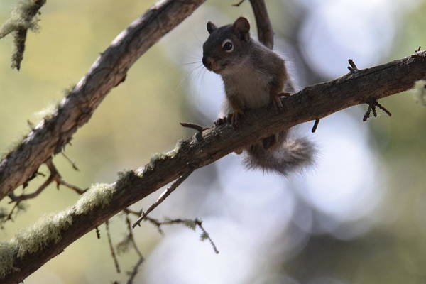 Photograph - Squirrel Echo Lake Trl by Margarethe Binkley