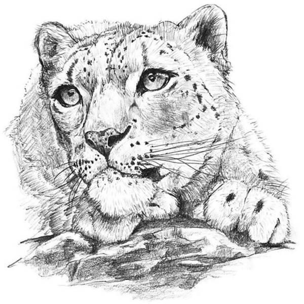 Animal Painting - Snowleopard by Shusaku Sato