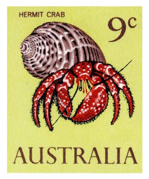 Reef Digital Art - 1966 Australia Hermit Crab Postage Stamp by Retro Graphics