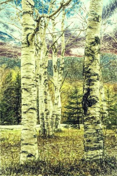 Digital Art - A Autumn Photo Of A Small Stand Of White Birch Trees. by Rusty R Smith