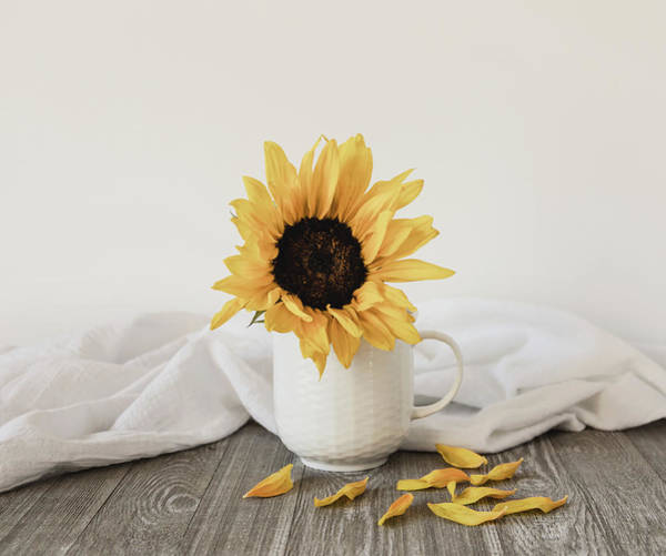 Photograph - Sunshine In A Cup by Kim Hojnacki