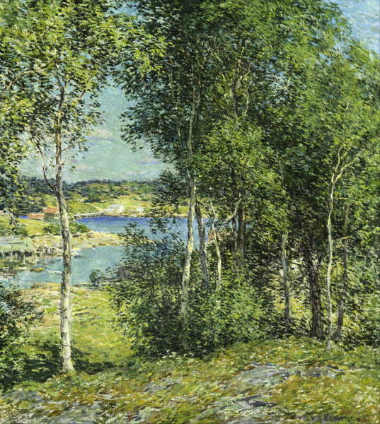 Wall Art - Painting - A Family Of Birches by Willard Leroy Metcalf