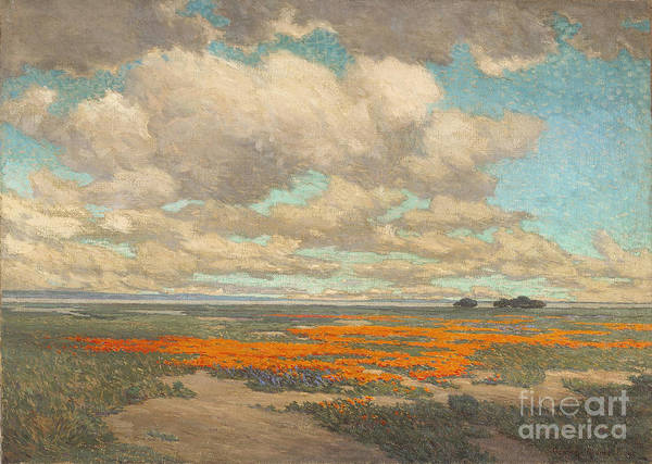 A Field Of California Poppies Art Print