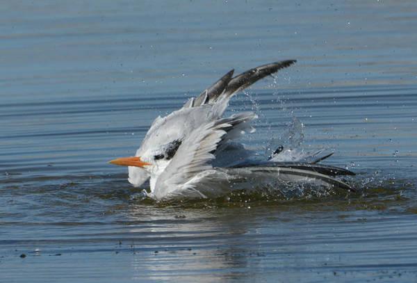 Photograph - A Good Splash by Fraida Gutovich