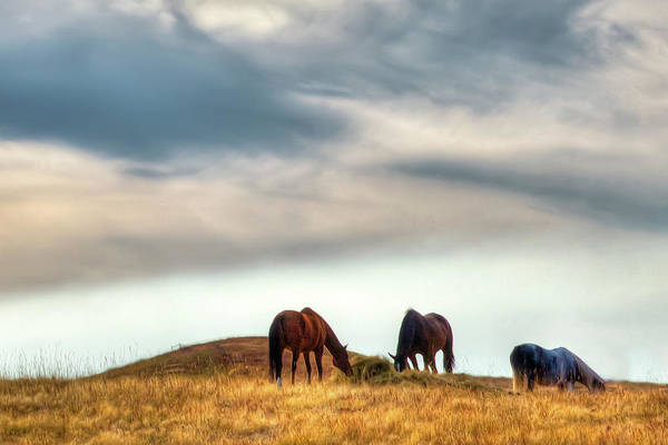 Photograph - A Palouse Landscape by David Patterson