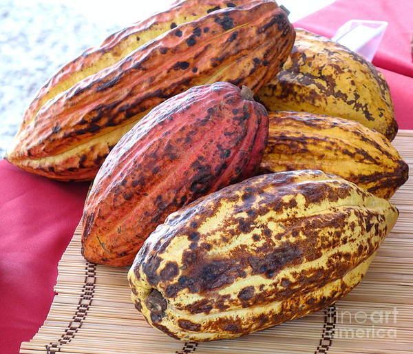 A Pile Of Cacao Pods Art Print