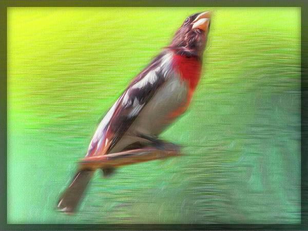 Digital Art - A Rose-breasted Grosbeakperching On A Limb. by Rusty R Smith