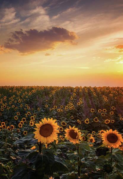 Photograph - A Summer Evening In Colorado by John De Bord
