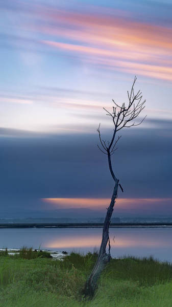 Photograph - A Tree  by Bruno Rosa