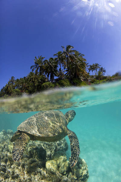 Turtle Photograph - Above N Below by James Roemmling