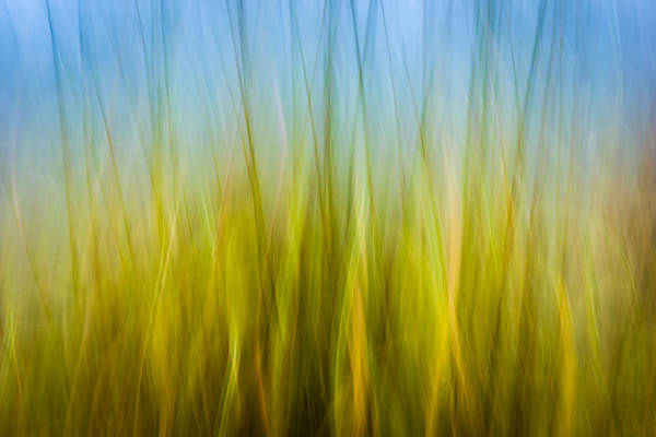 Photograph - Abstract Fall 8 by Joye Ardyn Durham