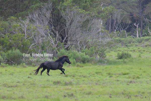 Photograph - Ace Running Free by Captain Debbie Ritter