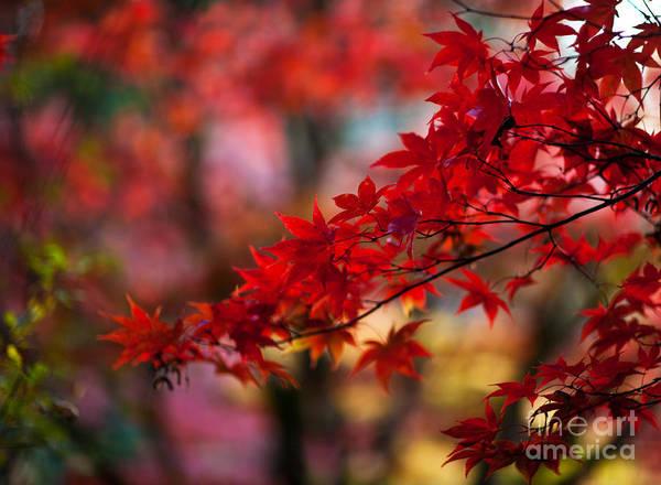 Dof Photograph - Acer Kaleidoscope by Mike Reid