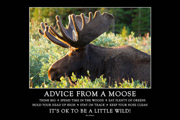Advice From A Moose Art Print
