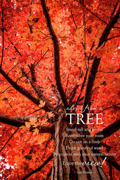 Photograph - Advice From A Tree by Teri Virbickis