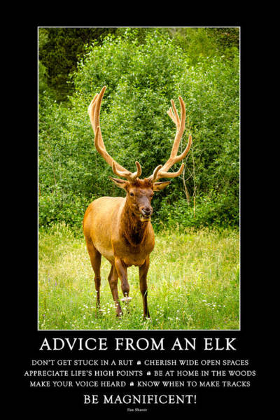 Photograph - Advice From An Elk by Teri Virbickis