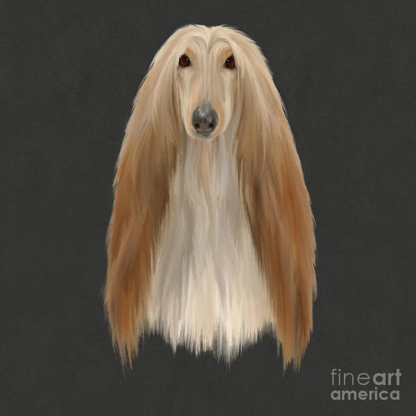 Wall Art - Painting - Afghan Hound  by John Edwards