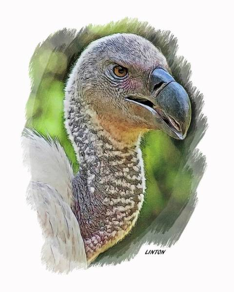 Digital Art - African Griffon Vulture by Larry Linton