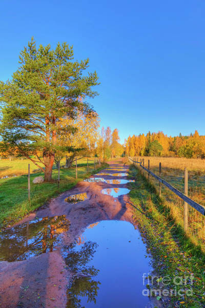 Birch Photograph - After The Rain by Veikko Suikkanen