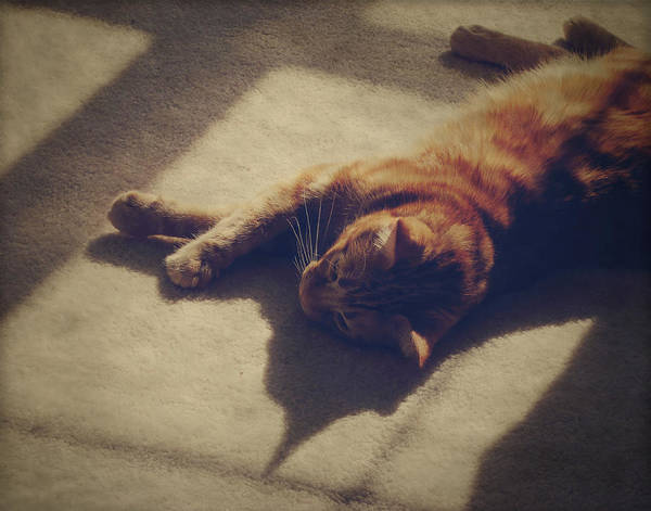 Orange Tabby Photograph - Afternoon Nap by Amy Tyler