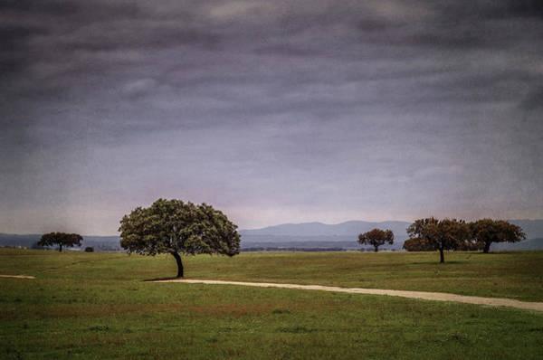Wall Art - Photograph - Alentejo Landscape by Carlos Caetano