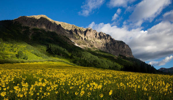 Alpine Meadows Photograph - Alpine Sunflowers Basking In The Glow Of Gothic Mountain by Bridget Calip
