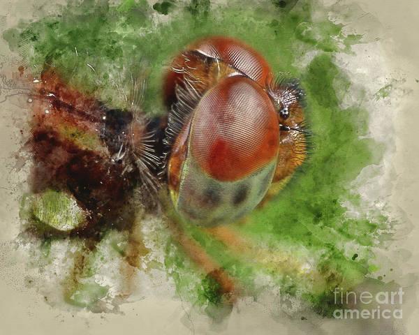 Compound Mixed Media - Amberwing Dragonfly by Edelberto Cabrera