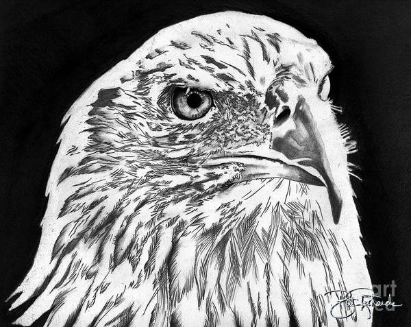 Drawing - American Bald Eagle by Bill Richards