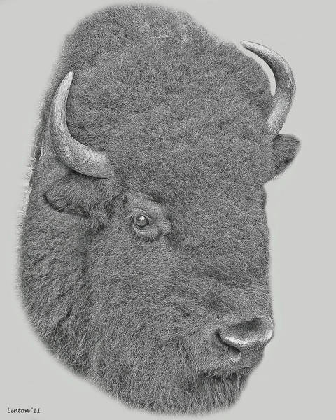 Digital Art - American Bison by Larry Linton