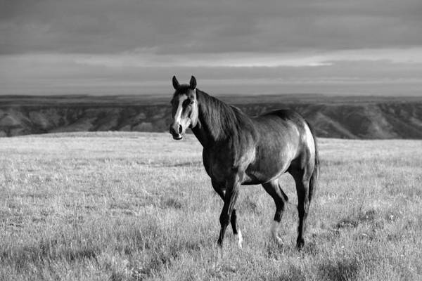 Photograph - American Quarter Horse by Todd Klassy