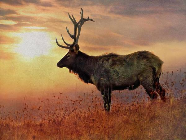 Digital Art - An Artistic View Of A Large Bull Elk Standing Alone On A Hill To by Rusty R Smith