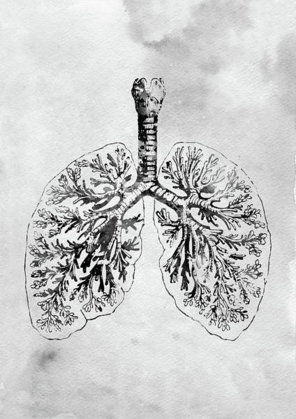 Lung Digital Art - Anatomical Lungs by Erzebet S