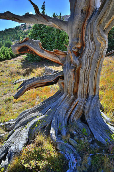 Photograph - Ancient One by Ray Mathis