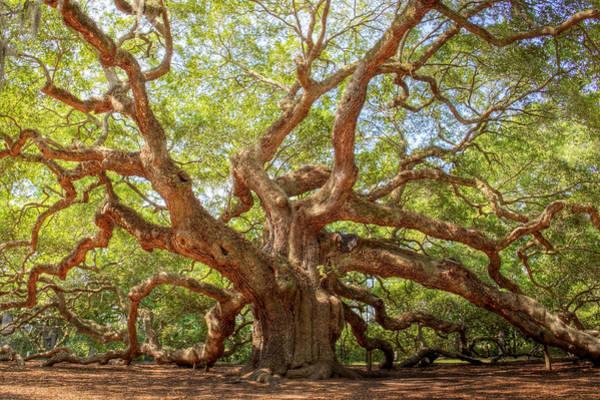 Wall Art - Photograph - Angel Oak Tree by Drew Castelhano