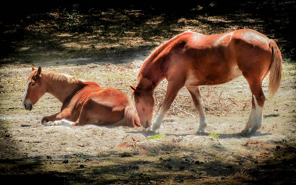 Mare And Foal Photograph - Anticipation by Karen Wiles