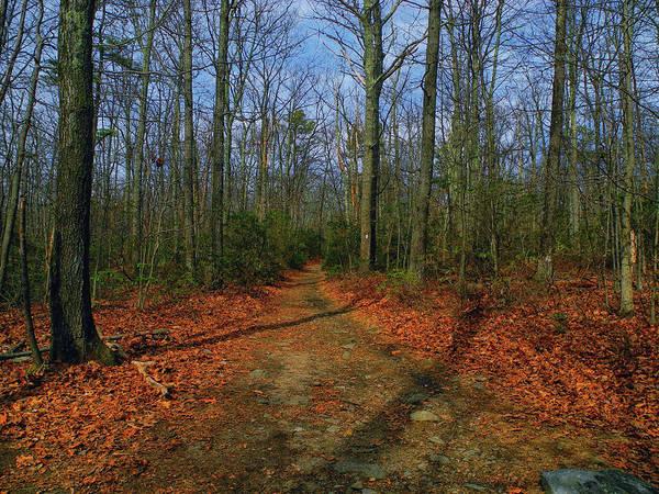 Photograph - Appalachian Trail In Maryland by Raymond Salani III