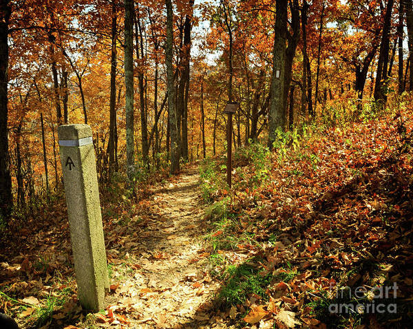 Wall Art - Photograph - Appalachian Trail In Shenandoah National Park In October by Louise Heusinkveld