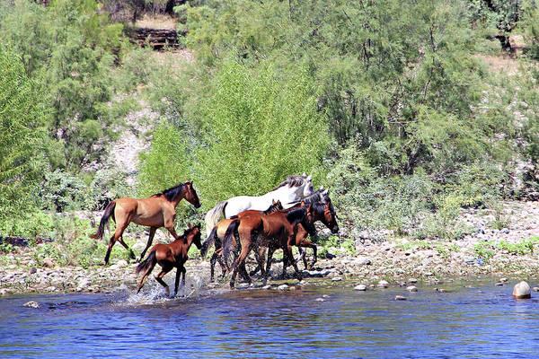 Arizona Wild Horses Art Print