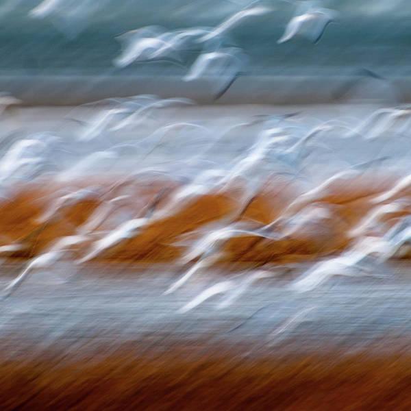 Photograph - Ascension by John Whitmarsh