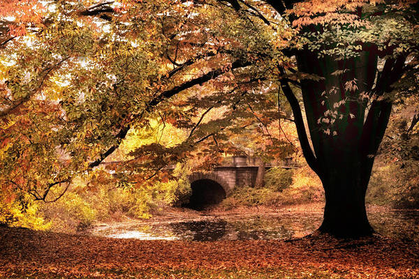 Photograph - Asian Autumn by Jessica Jenney