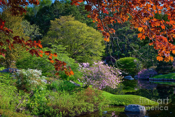 Wall Art - Photograph - Asticou Azalea Garden 2 by Susan Cole Kelly