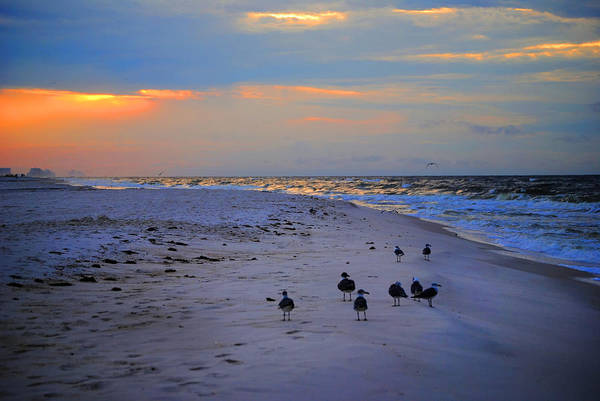 Photograph - August Beach Morning With The Sea Gulls by Michael Thomas