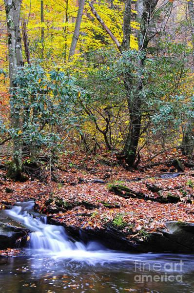 Birch River Photograph - Autumn Along Birch River by Thomas R Fletcher