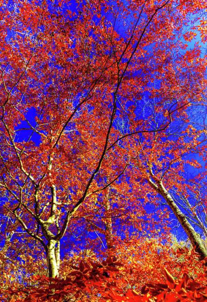 Wall Art - Photograph - Autumn Blaze by Karen Wiles