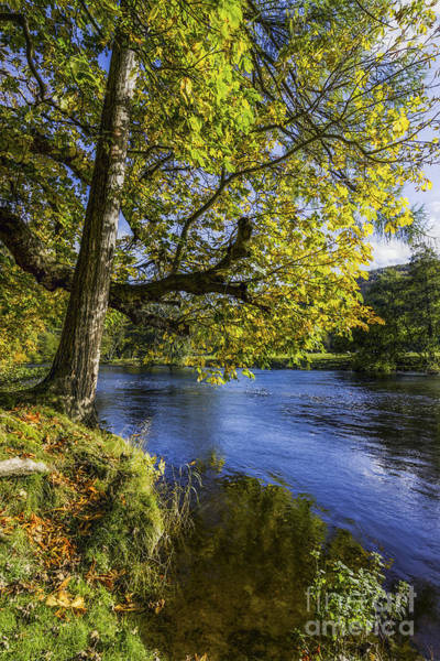 Photograph - Autumn By The River by Ian Mitchell