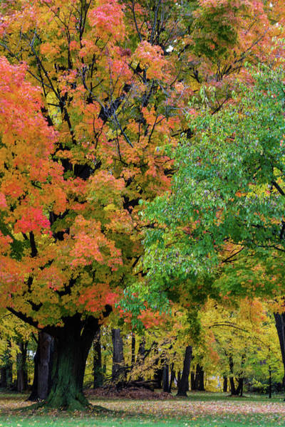Photograph - Autumn Colors by Stewart Helberg