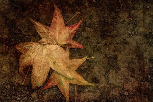 Wall Art - Digital Art - Autumn Deep by Terry Davis