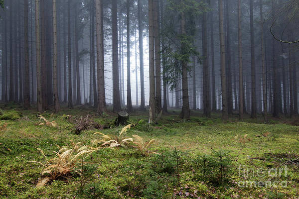 Tourism Wall Art - Photograph - Autumn Fog In The Spruce Forest by Michal Boubin